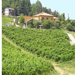 The CDO Colli Bolognesi wines Gaggioli farm