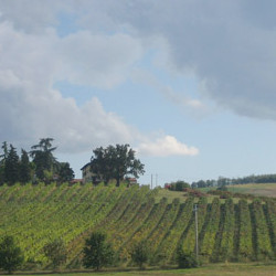 Vineyards of Manaresi agricoltura e vini Farm