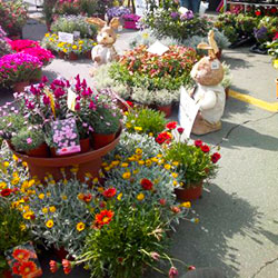 "Stalls of flowers for ""Sant'Agata in fiore"""