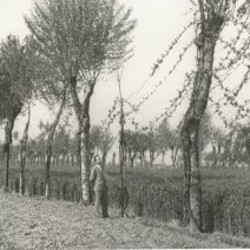"The ""piantata padana"""